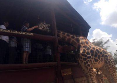 Giraffe Center in Nairobi, Kenya